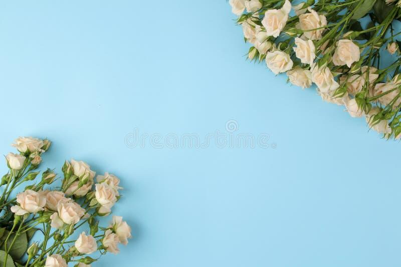 Pagina di belle mini rose su un fondo blu luminoso Bei fiori feste Vista da sopra fotografia stock