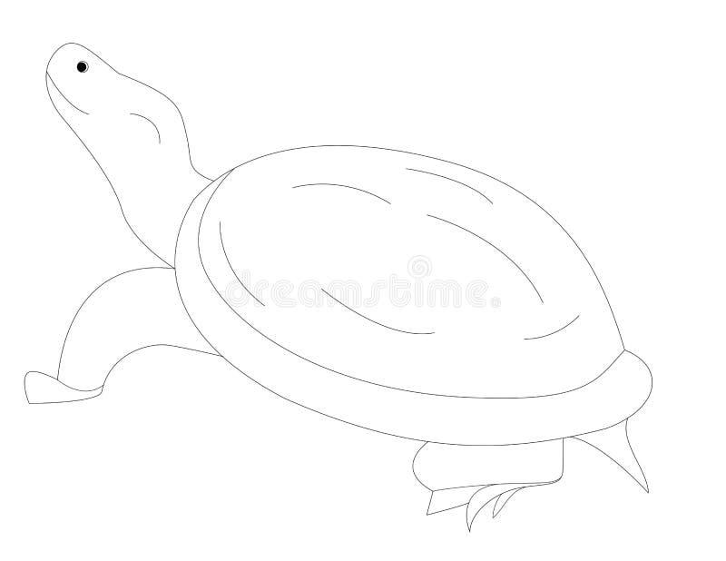 Tartaruga Marina Da Colorare Migliori Pagine Da Colorare