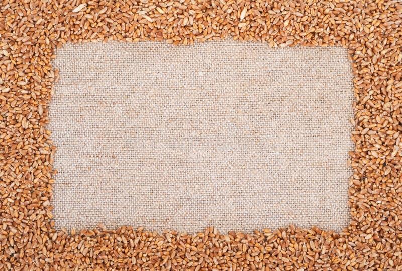 Pagina di grano sul licenziamento immagine stock