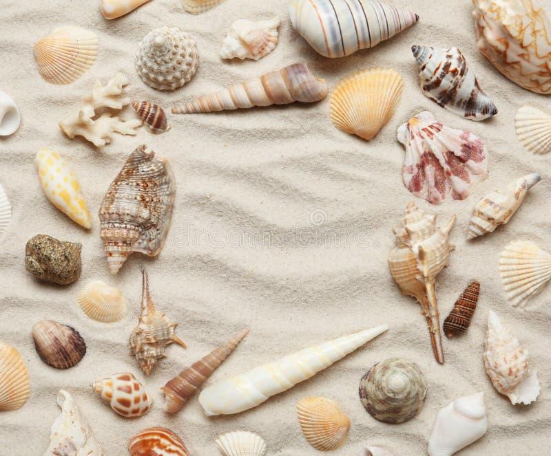 Pagina fatta delle conchiglie differenti sulla sabbia Spazio per testo fotografia stock