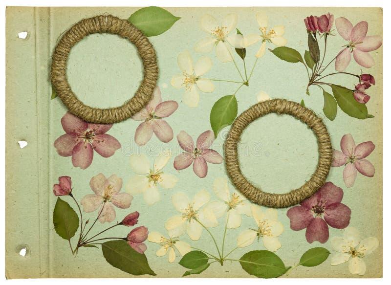 Pagina van een oude de pistachekleur van het fotoalbum stock fotografie