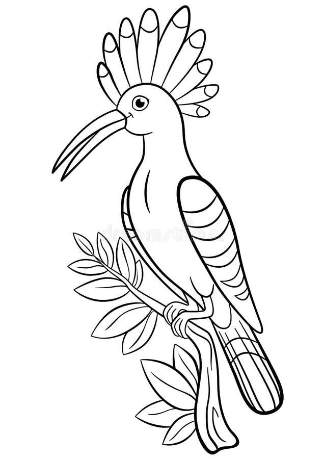 Pagine di coloritura La bella upupa sveglia si siede sul ramo di albero illustrazione di stock