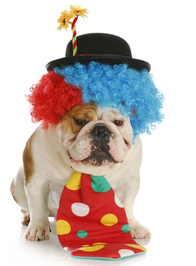 Pagliaccio del cane fotografie stock