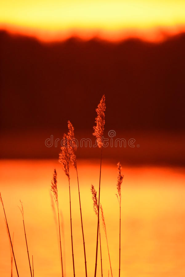 Paglie nel tramonto immagini stock