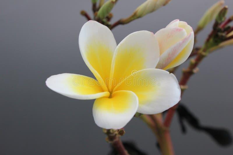 Download Pagoda image stock. Image du doux, fleur, vert, temple - 45352855