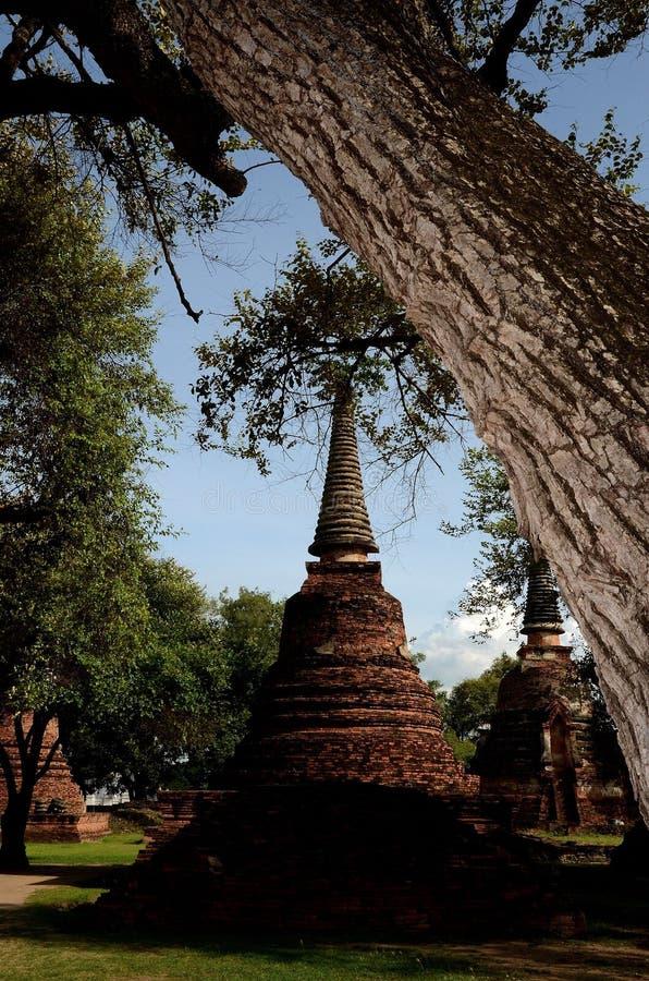 Pagoda con el árbol en primero plano fotos de archivo