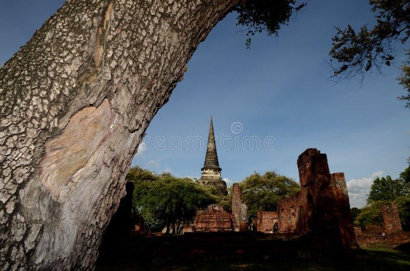 Pagoda con el árbol en primero plano foto de archivo libre de regalías