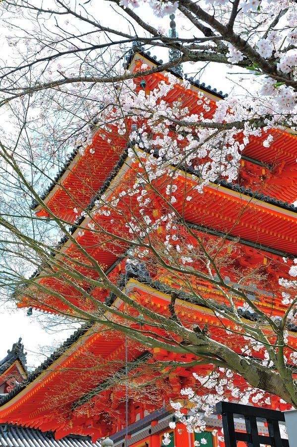 Pagoda con la flor de cerezo imagenes de archivo