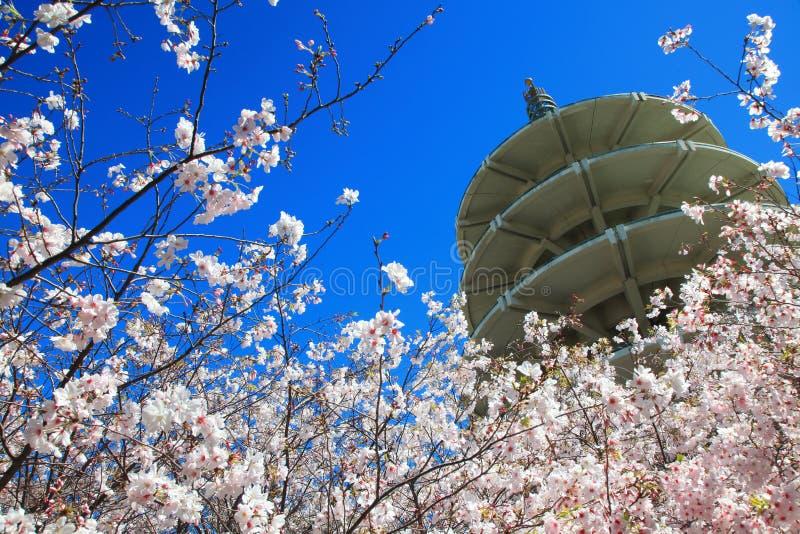 Pagoda de la paz de Japón y flor de cereza de centro fotos de archivo