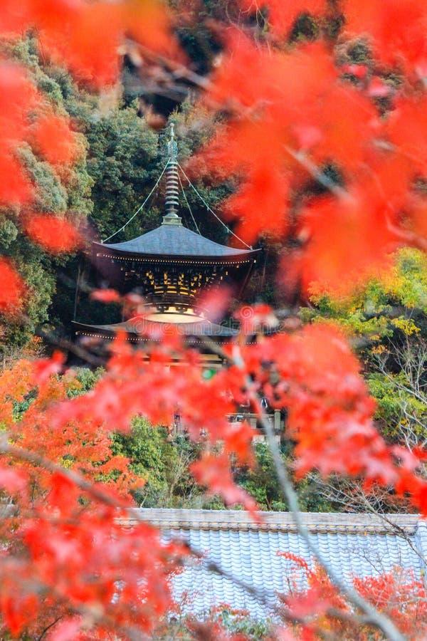 Pagoda del follaje de otoño y de Tahoto en el templo de Eikando, Sakyo-ku, Kyoto, Japón imagenes de archivo