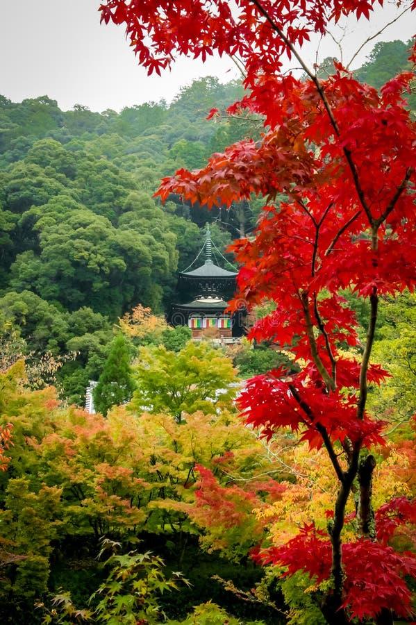 Pagoda di Eikando e fogliame di autunno - Kyoto, Giappone fotografia stock libera da diritti