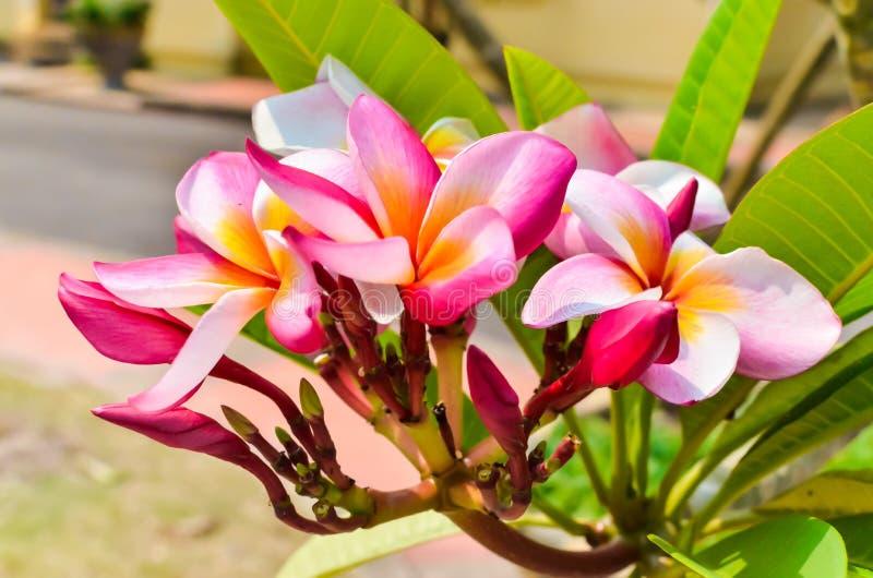 Pagoda pink flower stock photo