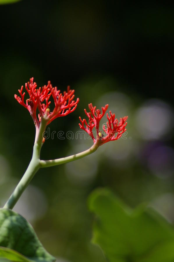 Download Pagoda  Plant stock photo. Image of flower, photograph - 25376198