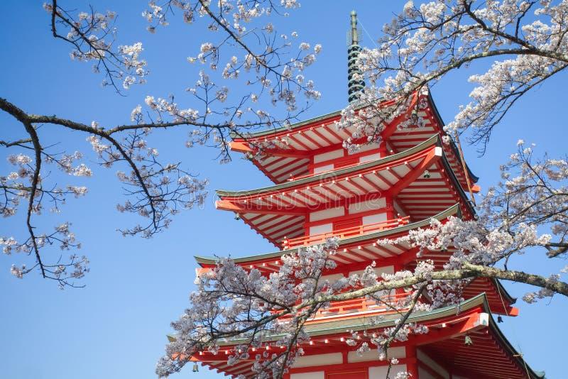 Pagoda roja de Japón con la flor de cerezo de Sakura fotografía de archivo