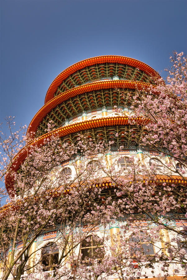 Pagoda and sakura. Flowers on blue sky in spring stock photography