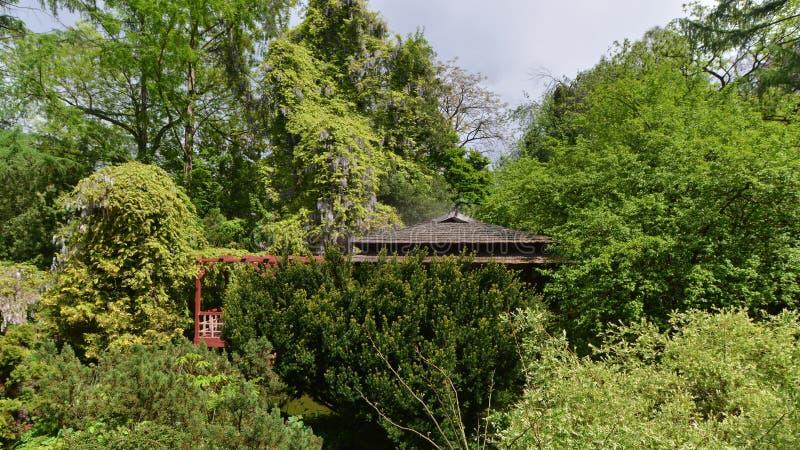Pagode met dichte vegetatie en het bloeien in de Japanse tuin van de Botanische Tuin in cluj-Napoca, Roemenië royalty-vrije stock foto's