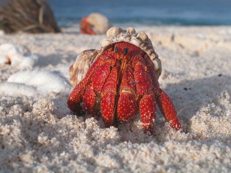 Paguro nelle coperture sulla spiaggia immagine stock libera da diritti