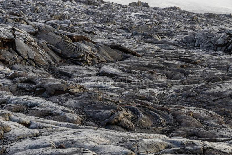 Pahoehoe Lava field on Hawaii`s Big Island. Chain of Craters Road, Volcano National Park royalty free stock images