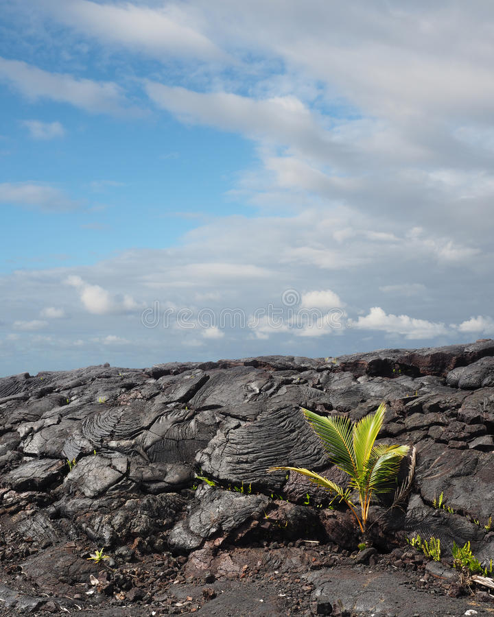 Pahoehoe Lava Flow in hawaii. Pahoehoe Lava Flow near Hilo Hawaii royalty free stock images