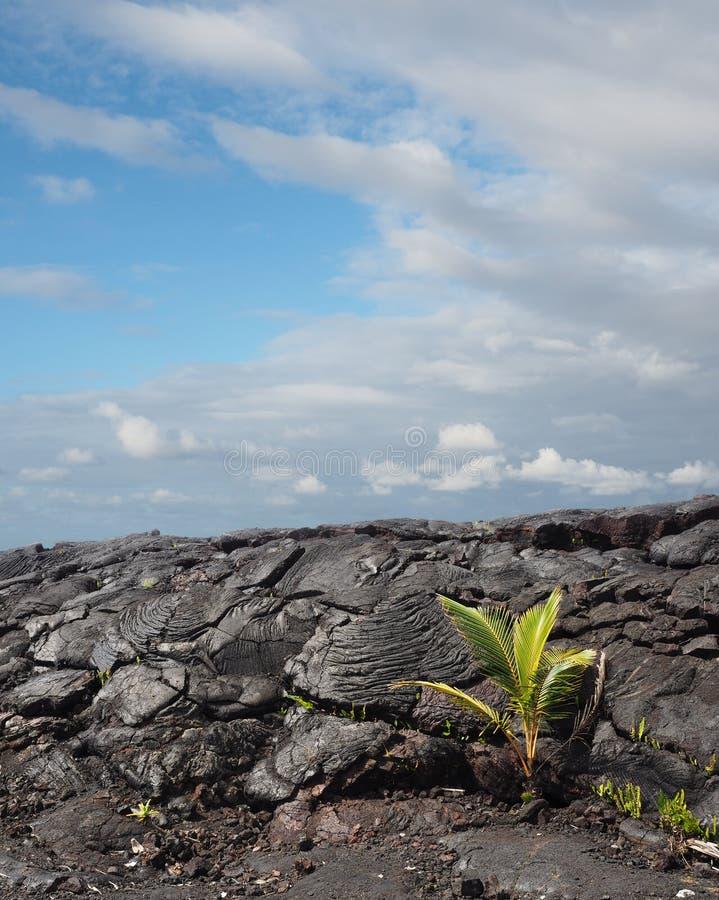 Pahoehoe Lava Flow i hawaii royaltyfria bilder