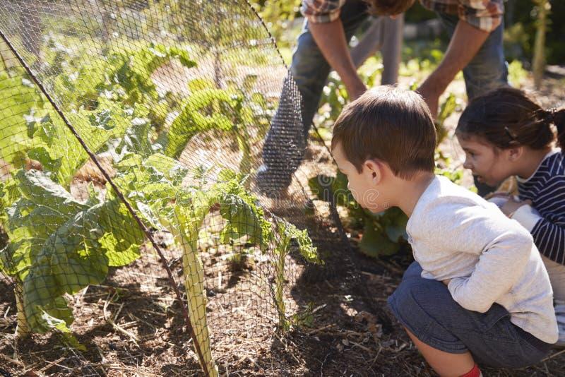 Pai And Children Looking no crescimento de colheitas na atribuição fotografia de stock royalty free