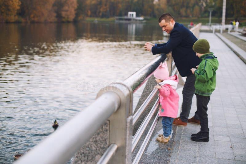 Pai com crianças anda e alimenta os patos imagens de stock