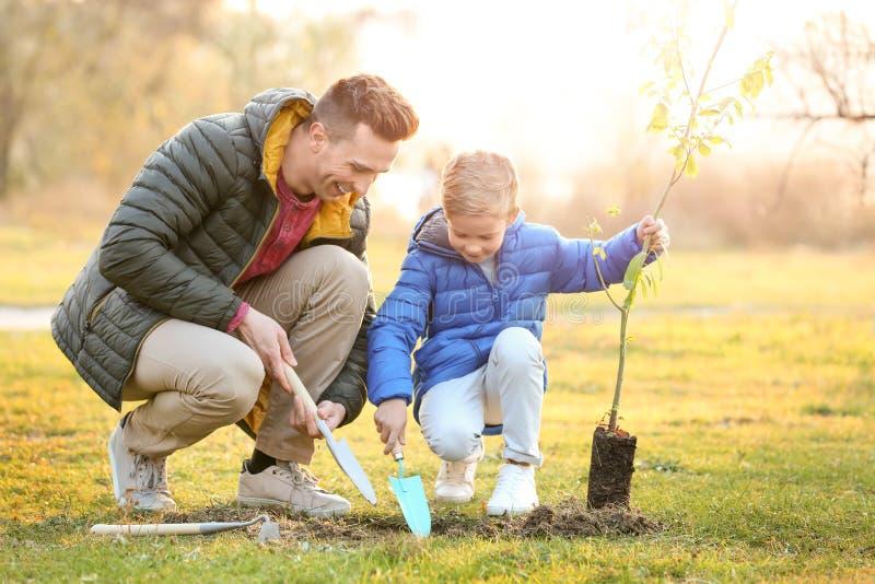 Pai com o filho pequeno que planta a árvore fotos de stock royalty free