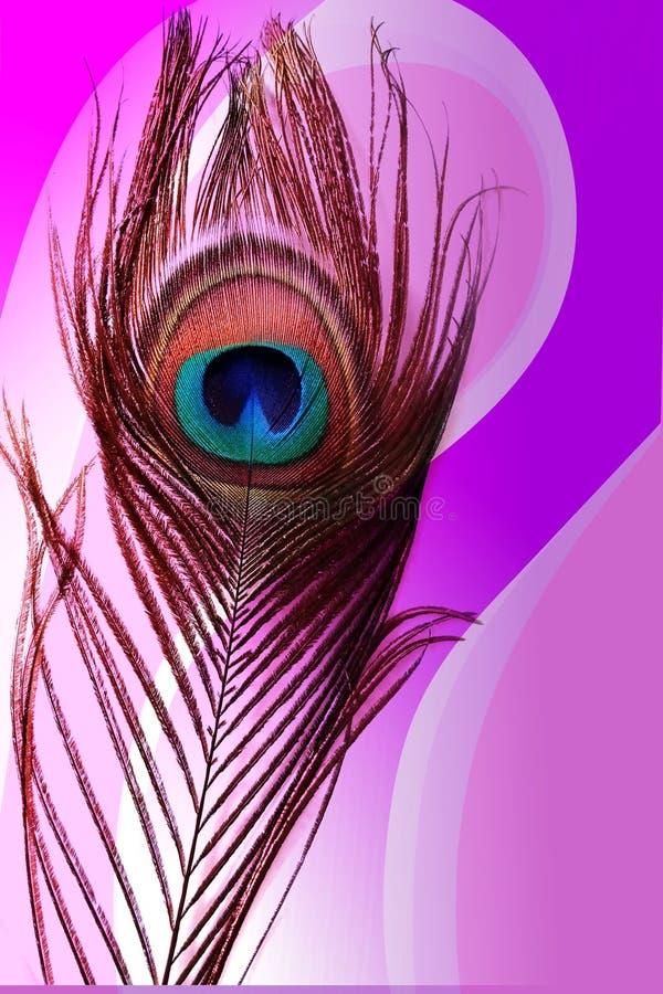 Pai do pavão com fundo protegido colorido abstrato Ilustração do vetor ilustração do vetor