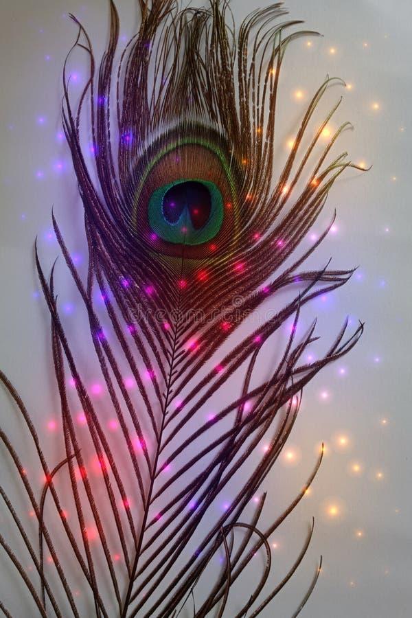 Pai do pavão com fundo protegido colorido do vetor abstrato com brilhos Ilustração do vetor ilustração do vetor