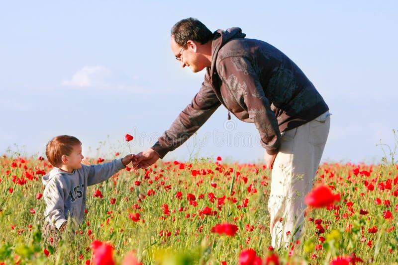Pai e filho no campo da papoila fotografia de stock royalty free