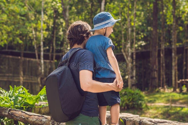 Pai e filho no jardim zoológico Dia da despesa com a família no jardim zoológico fotografia de stock