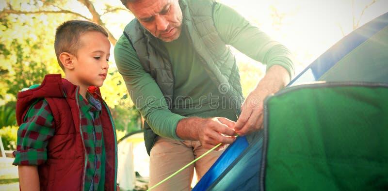 Pai e filho que estabelecem a barraca no acampamento imagem de stock royalty free