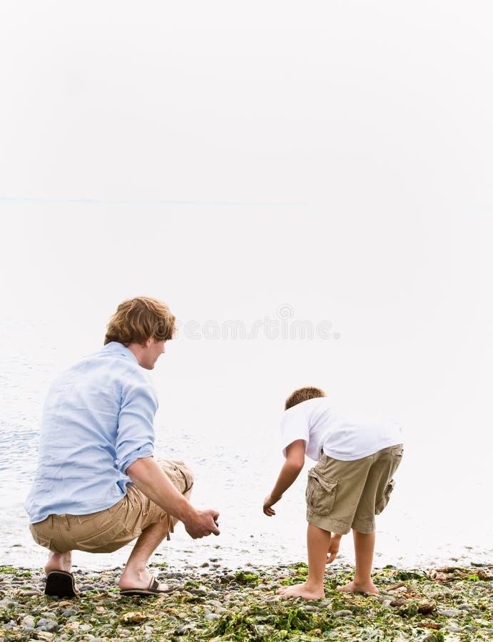 Pai e filho que recolhem rochas na praia foto de stock