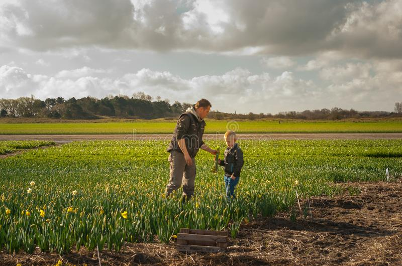 Pai e filho que trabalham nos campos de flor, recolhendo grupos foto de stock royalty free