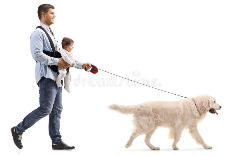 Pai que anda um cão e que leva um bebê em um portador fotos de stock royalty free