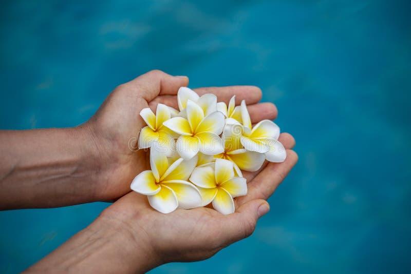 Paia delle mani della donna che tengono i fiori fragranti bianchi sul fondo blu della piscina Mani della ragazza e fiori tropical immagine stock