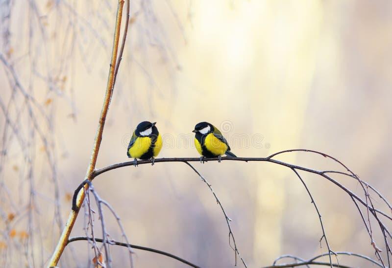 paia di piccoli capezzoli dell'uccello che si siedono su un ramo della betulla in Sunny Park su una mattina di inverno fotografia stock