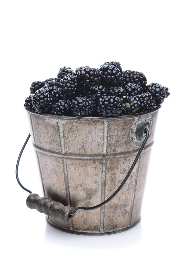 Pail of Fresh Picked Blackberries. A pail of freshly picked blackberries on a white background with slight reflection. Vertical Format stock image