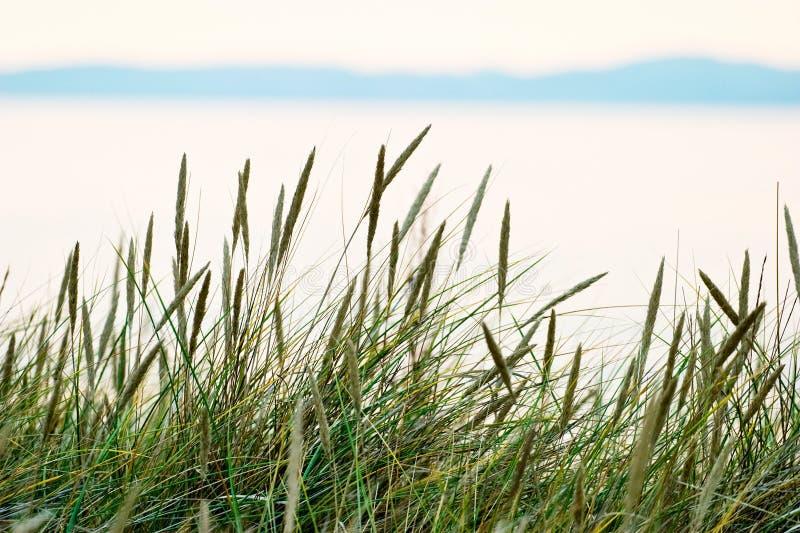 paille d'herbe image libre de droits