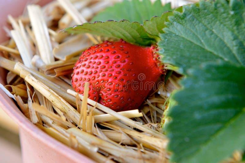 Paille dans la fraise images stock