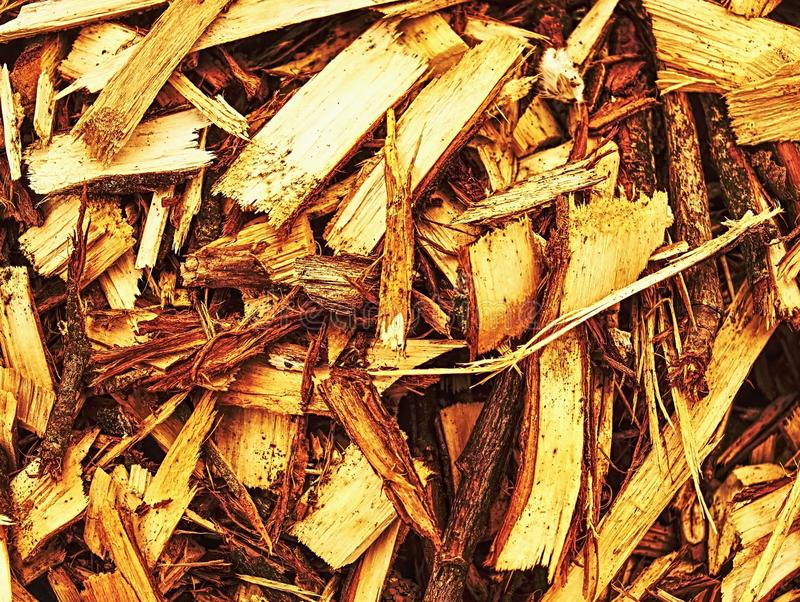 Paillis en bois frais de puces Déchets de sciure dans la forêt photos stock