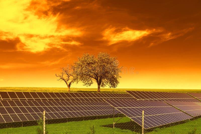Painéis da energia solar antes das árvores e do céu do por do sol fotos de stock