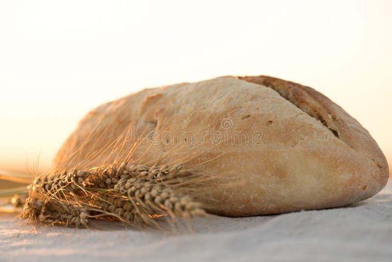 Pain dans le coucher du soleil Oreilles de pain et de bl? photo libre de droits