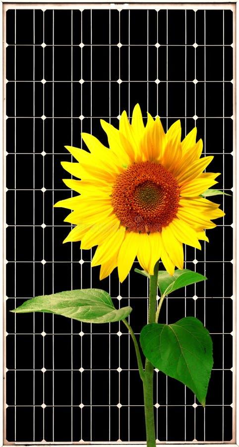 Painel da energia solar com girassol imagem de stock royalty free