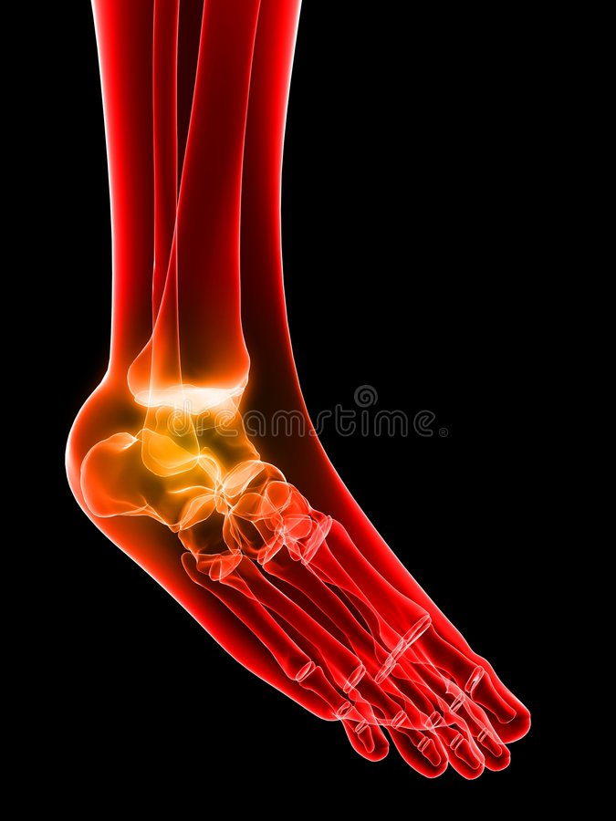 Download Painful ankle stock illustration. Image of bones, health - 5564172