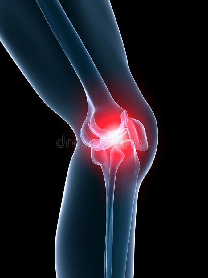 Painful knee. 3d rendered anatomy illustration of a human skeletal knee with pain royalty free illustration