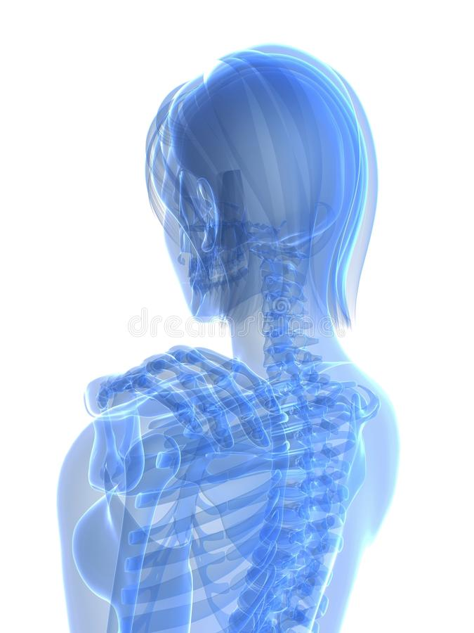 Download Painful shoulder stock illustration. Illustration of skeletal - 14144119