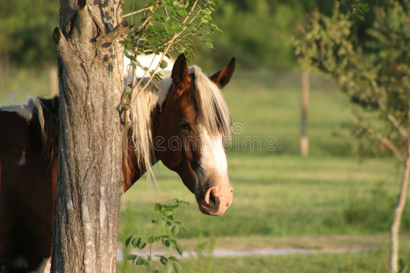 Paint horse royalty free stock photography