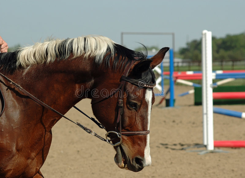 Download Paint Horse Jumper stock photo. Image of male, color, horse - 5276244