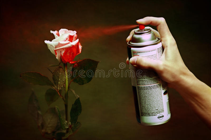 Paint the Roses Red stock photography